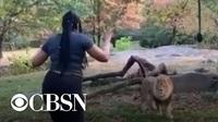 """Mỹ bắt người phụ nữ thản nhiên trèo vào chuồng, nhảy múa """"trêu"""" sư tử"""