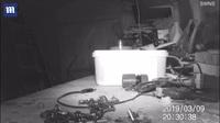 Video chuột dọn nhà kho cho ông Mckears