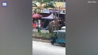 """Trung Quốc: Không tìm được """"bạn tình"""", voi tức giận xông ra đường đập phá"""