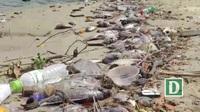 Hàng tấn cá chết nổi trắng sông Phú Lộc - Đà Nẵng