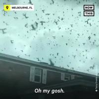 """Cảnh tượng như tận thế ở Mỹ khi hàng triệu con bọ """"xâm chiếm"""" thành phố!"""