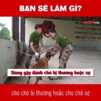 Video hướng dẫn kỹ năng thoát thân khi bị chó dữ tấn công