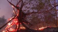 15ha rừng phòng hộ ven biển bị thiêu rụi sau 5 giờ hỏa hoạn