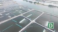 Phú Yên: Làm hồ nuôi tôm kiên cố trên đất, rừng phòng hộ