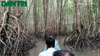 Khám phá tuyến du lịch xuyên rừng Mũi Cà Mau.