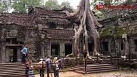 """Rễ cây cổ thụ vặn xoắn như trăn khổng lồ muốn """"nuốt chửng"""" ngôi đền"""