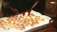Những điều thú vị của nghề trứng lộn