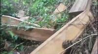 """Cận cảnh """"lâm tặc"""" phá rừng Kbang"""
