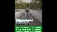 Ngỡ ngàng với những con đường dành cho xe đạp đẹp nhất thế giới!