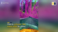 Máng trượt nước xuyên qua đường hầm hoa tím ở độ cao 70m
