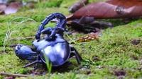 Gay cấn đến phút chót: Cuộc chiến sinh tử giữa bọ cạp và bọ cánh cứng!