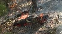 Rừng thông hàng chục năm tuổi bốc cháy và cháy lớn cơ sở chăn ga gối nệm