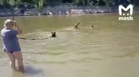 Cô gái dắt gấu đến bãi tắm bơi cùng du khách