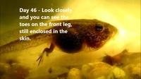 Quá quen thuộc nhưng bạn có thực sự biết nòng nọc trở thành ếch như thế nào?