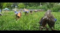 Mô hình nuôi ong vò vẽ ở Nghĩa Thuận, Thái Hòa (Nghệ An) của anh Nguyễn Văn Thành.