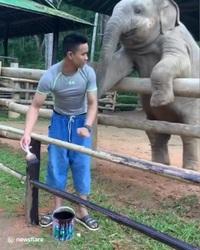 Chú voi con đáng yêu tìm mọi cách để lôi kéo nhân viên sở thú chơi đùa cùng mình