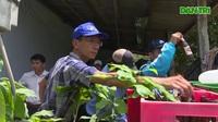 Đoàn công tác Bộ Y tế  kiểm tra tình hình phòng chống sốt xuất huyết tại Phú Yên
