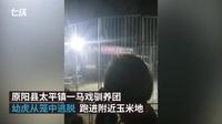 Trung Quốc: Hổ xổng chuồng ngay giữa màn trình diễn, người xem hoảng loạn tháo chạy