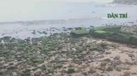 Bình Định: Bãi biển Quy Nhơn bất ngờ phát lộ bãi đá phủ rêu xanh