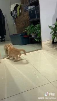 Chết cười với chú mèo hoảng sợ khi thấy mình trong gương