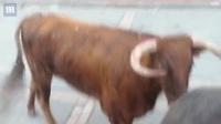 Clip: Đứng xem bò tót từ trong nhà những tưởng an toàn, ai ngờ... bò lồng qua cửa sổ