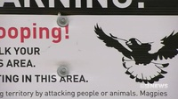 Tử vong vì bị chim trong công viên tấn công