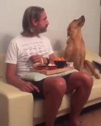 """Chết cười chú chó thể hiện """"gương mặt lạnh lùng"""" với chủ của mình"""