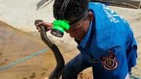 Thót tim xem cảnh bắt rắn hổ mang chúa ở Thái Lan