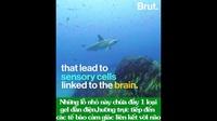 """Giải mã """"giác quan thứ 6"""" giúp cá mập phát hiện con mồi ngay cả trong bóng tối!"""