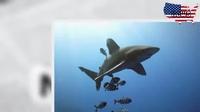 Bị cá mập cắn nát tay khi lặn biển ngắm cá voi