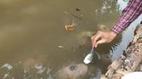 Quá độc, lạ Cần Thơ: Đút từng thìa cơm cho cá ăn như đút cho em bé