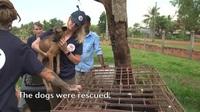 Giải cứu những chú chó ở Campuchia