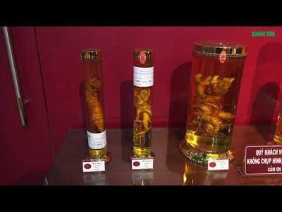 """Chiêm ngưỡng bảo tàng """"báu vật đại ngàn"""" sâm Ngọc Linh ở TPHCM"""
