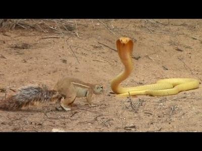 """Khoảnh khắc sóc mẹ """"tử chiến"""" với rắn hổ mang để cứu con"""