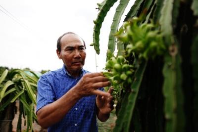 Long An: Nông dân huyện nông thôn mới Châu Thành phấn khởi được mùa