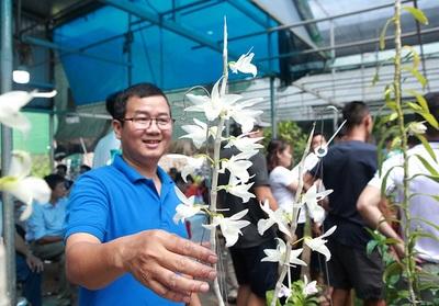 Chiêm ngưỡng những giỏ hoa lan đột biến hiếm có giá trăm triệu