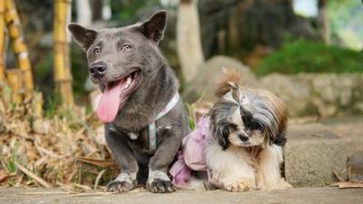Gặp chú chó Dúi mê du lịch, check-in muôn nơi, có 230 ngàn người theo dõi