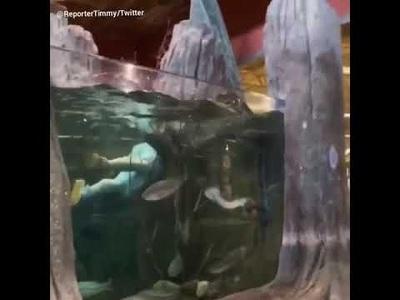 Nhảy vào bể cá thủy cung để có 5 phút huy hoàng trong đời