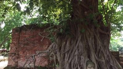 """Đầu tượng Phật 700 năm tuổi được rễ cây chằng chịt """"ôm trọn"""""""
