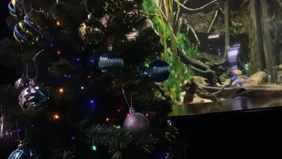 Lươn phóng nguồn điện cực mạnh để thắp sáng cây