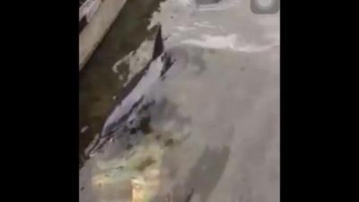 Người dân cứu cá heo trôi dạt vào bờ biển