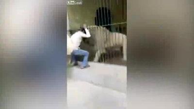Hãi hùng khoảnh khắc nhân viên sở thú Pakistan bị sư tử trắng tấn công