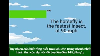 Kỳ thú cuộc đua giữa những động vật nhanh nhất hành tinh: Bất ngờ với nhà vô địch