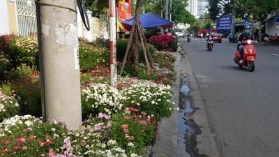 Nha Trang ngập hoa Tết, du khách háo hức dạo phố