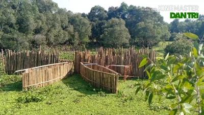 Rừng tràm Trà Sư được công nhận là rừng tràm đẹp nhất Việt Nam
