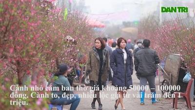 """Đào Nhật Tân bung nở """"nhuộm đỏ"""" chợ hoa lớn nhất ở Hà Nội"""