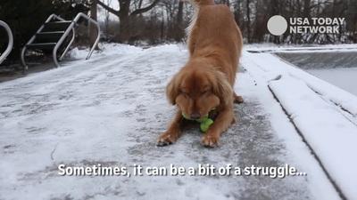 Finley, chú chó có biệt tài ngậm 6 quả bóng tennis trong miệng một lúc