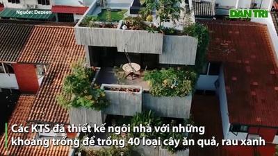 Bất ngờ ngôi nhà 3 tầng trồng hơn 40 loại cây ăn quả giữa phố thị chật chội