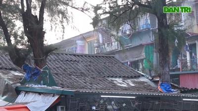 Độc đáo cây mọc xuyên nhà trong khu tập thể lâu đời bậc  nhất Hà Nội