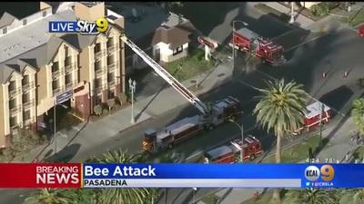 Đóng cửa cả một con phố vì 40.000 con ong sát thủ vỡ tổ